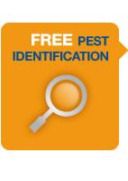 free-pest-ident